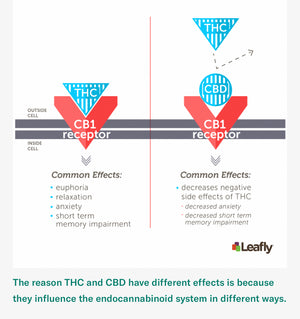CBD- What Does It Do and How Does It Affect Us?