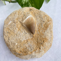 Large Cast Iron Cauldron Tripod