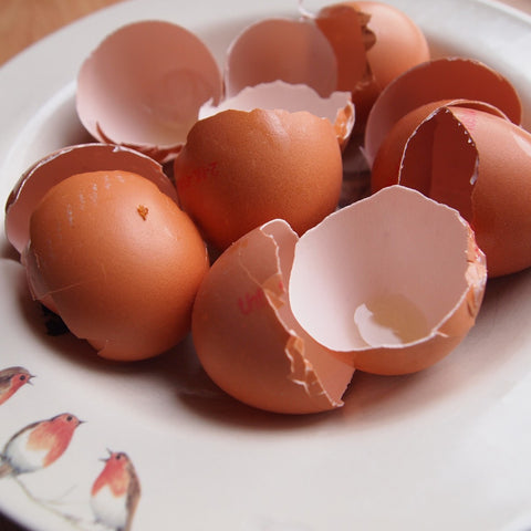 egg shells in a plate