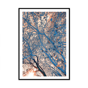 natural network climate edition photography and illustration limited edition art print created by artist phil at what phil sees for your home gallery wall
