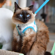 "Puss ""Q"" Harness for cats by Catspia"