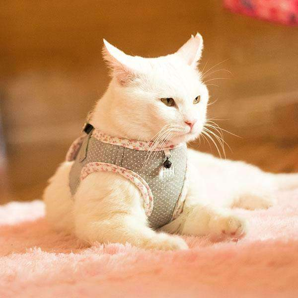 Tia Harness for cats by Catspia