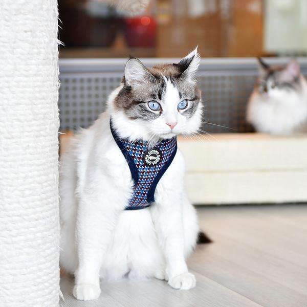 "Darke ""A"" Harness For Cats By Catspia"