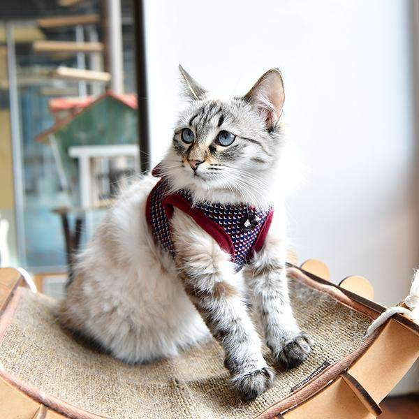 "Darke ""B"" Harness For Cats By Catspia"