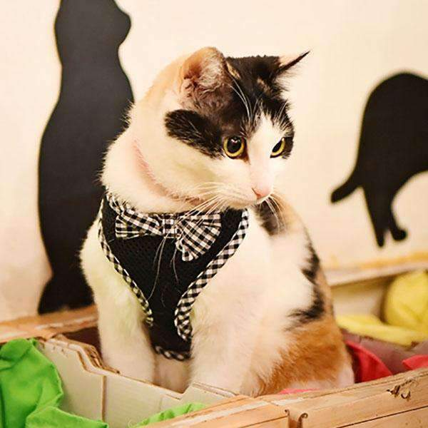 "Evie ""Q"" Harness for cats by Catspia"