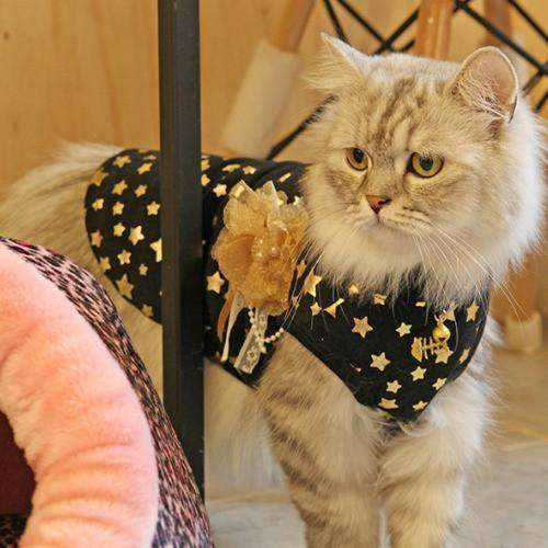 fantasia sweater for cats by Catspia