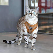 "Lumi ""Q"" Harness For Cats By Catspia"