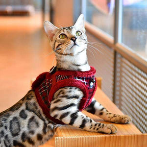 "Nevi ""B"" Harness For Cats By Catspia"