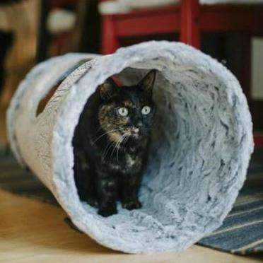 purr and pounce cat tunnel in gray