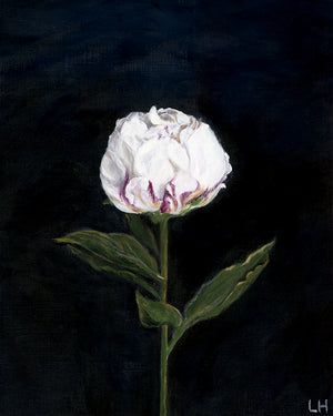 White Peony Flower Acrylic Painting - Art Print