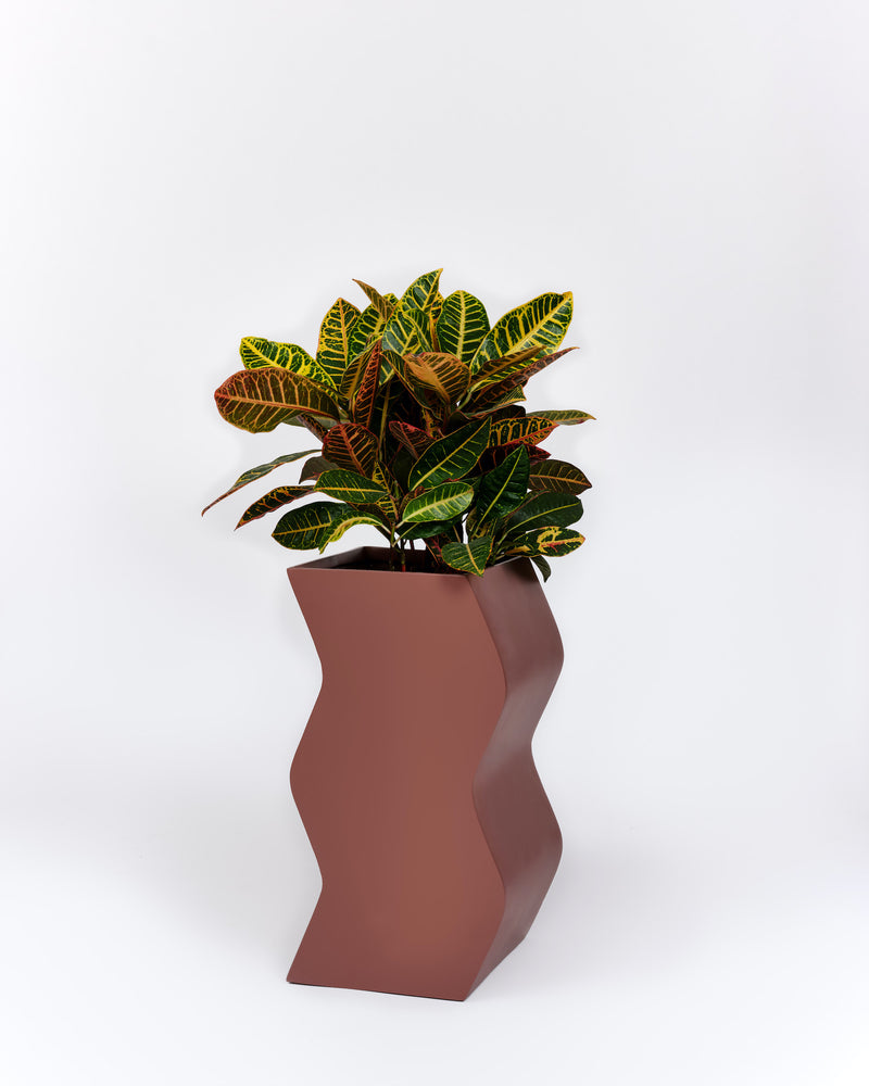 Curvy Planter - PIECES by An Aesthetic Pursuit