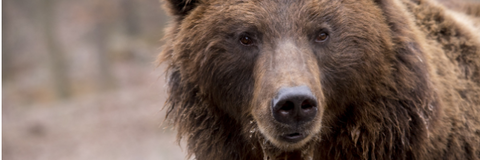 Grizzly Bear National Park Free Admission Days
