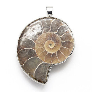 Ammonite Pendant 40x25mm