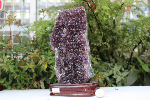 Amethyst Druze on Base