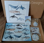 Selection Box - Whales & Sharks
