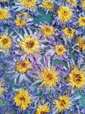 "Drying Organic Whole Flower Blue Lotus, Nymphaea caerulea, ""Siamese Dream™"" For Sale from Schmerbals Herbals"