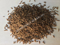 Dried Whole Caraway Seed, Carum carvi, for Sale from Schmerbals Herbals