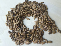 Dried Organic Milk Thistle Seed, Silybum marianum, for Sale from Schmerbals Herbals