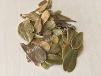 Dried Uva Ursi Leaf, and Organic Leaf, Arctostaphylos uva ursi, for Sale from Schmerbals Herbals