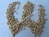 Dried Hard White Winter Wheat Berries, Triticum spp, for Sale from Schmerbals Herbals