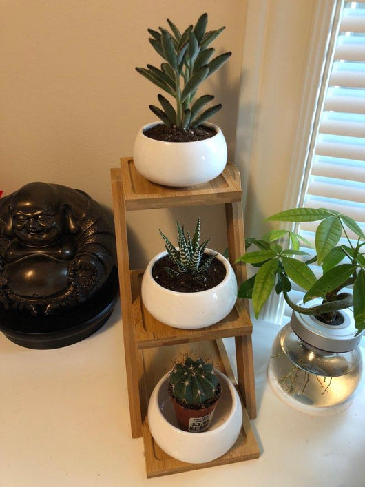 Contemporary Bamboo Plant Shelf with Ceramic Planters - Nazamida