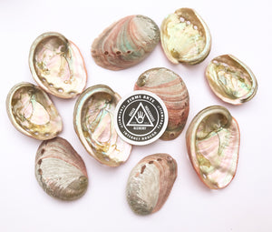 Mini Abalone Shells