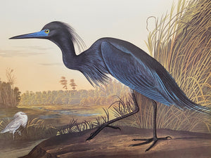 (S) Gallery 19 - Audubon Birds of America in a reduced size and trimmed double elephants.