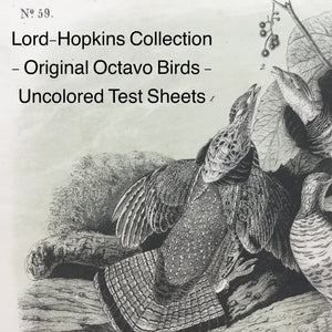 (K) Gallery 11 - Audubon Octavo Test Sheets from Bowen's studio - Lord-Hopkins Collection, the last prints to come out of Bowen's studio.