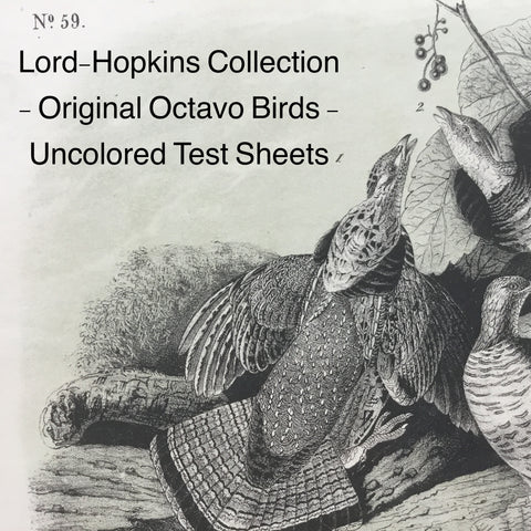 Audubon Octavo Test Sheets from Bowen's studio - Lord-Hopkins Collection