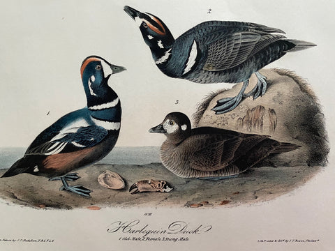 Gallery 6 - Original Audubon Octavo Birds