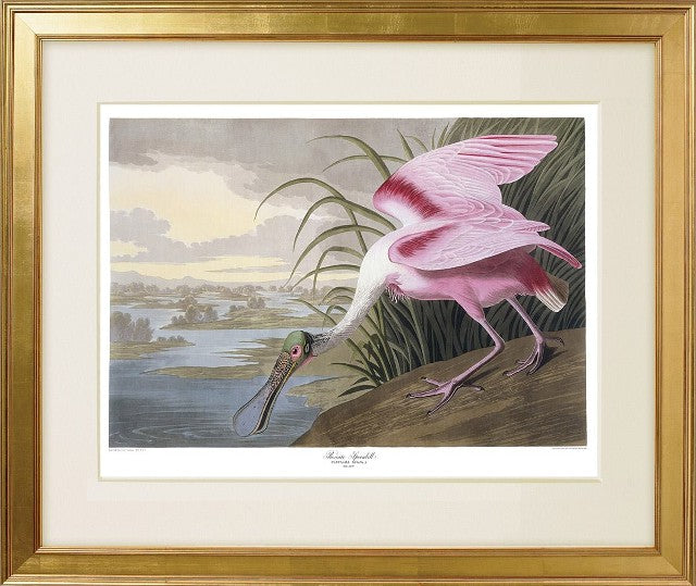 Audubon prints from princetonaudubonprints.com