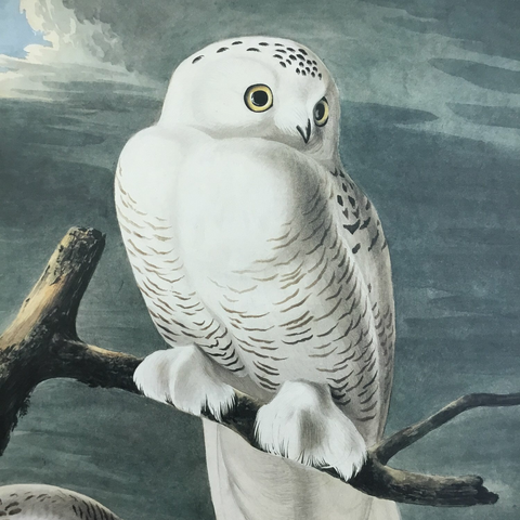 Watercolor Snowy owl
