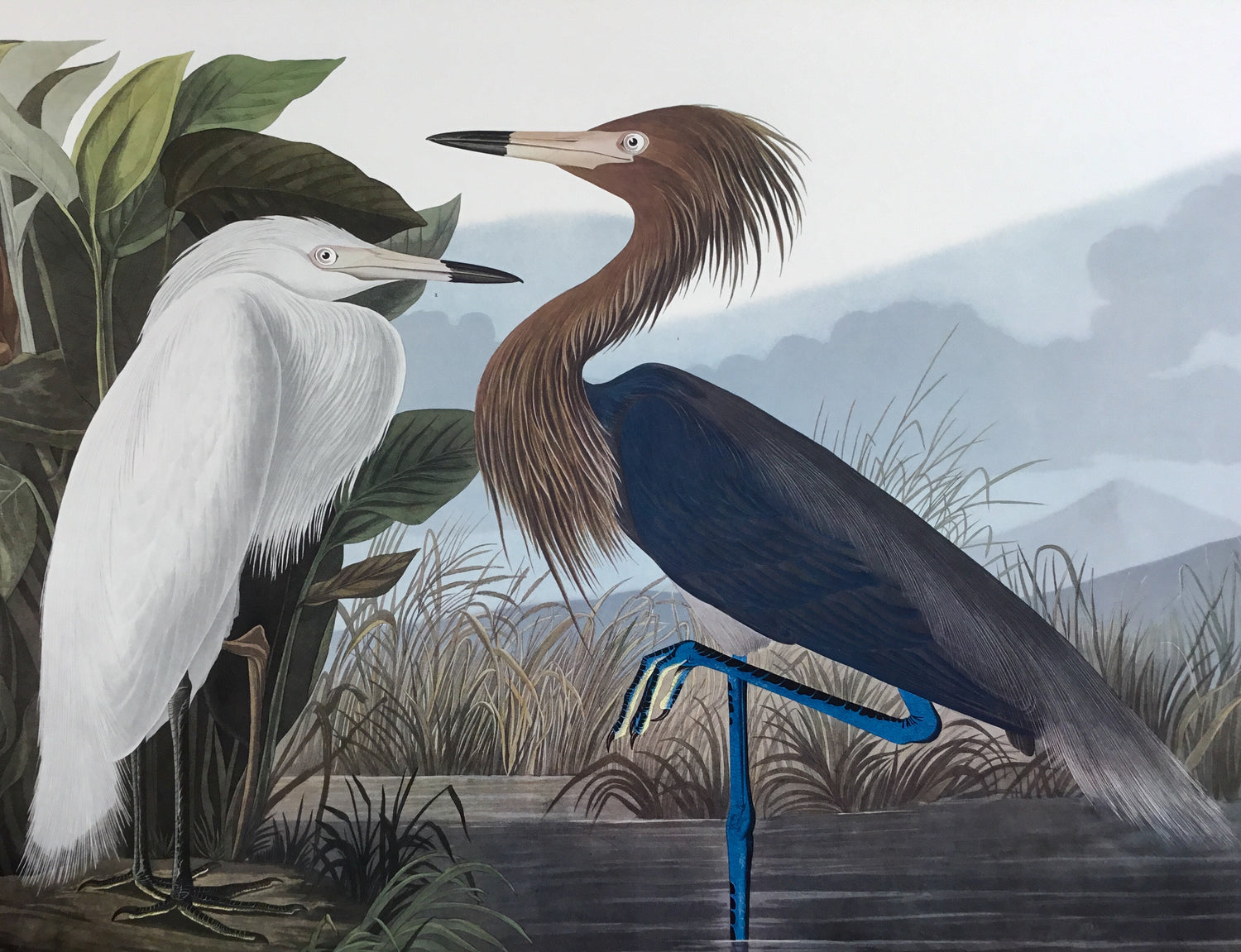 Audubon prints from John James Audubon's Birds of America