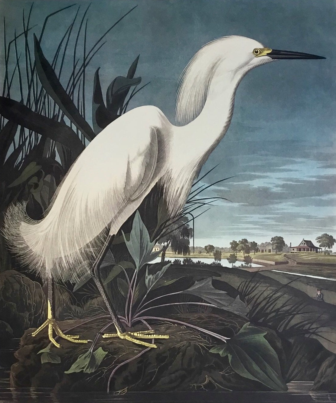 Audubon Birds of America Snowy Egret or Heron.