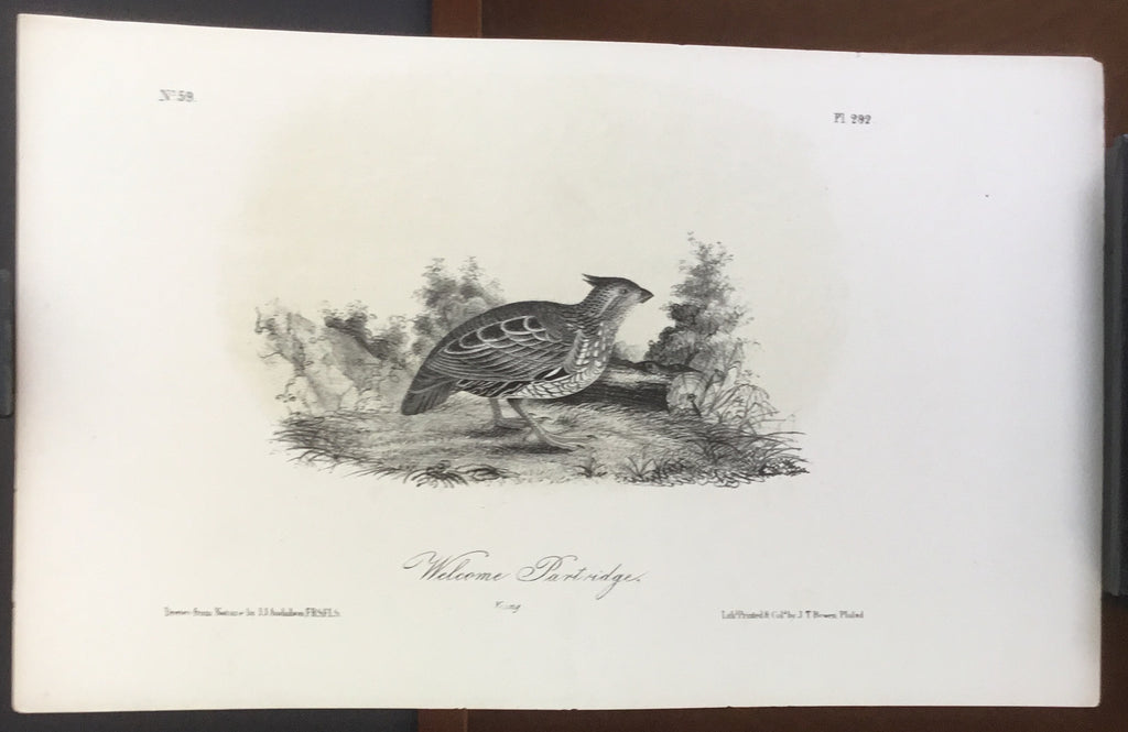 Audubon Octavo Welcome Partridge (2), plate 292, uncolored test sheet, 7 x 11