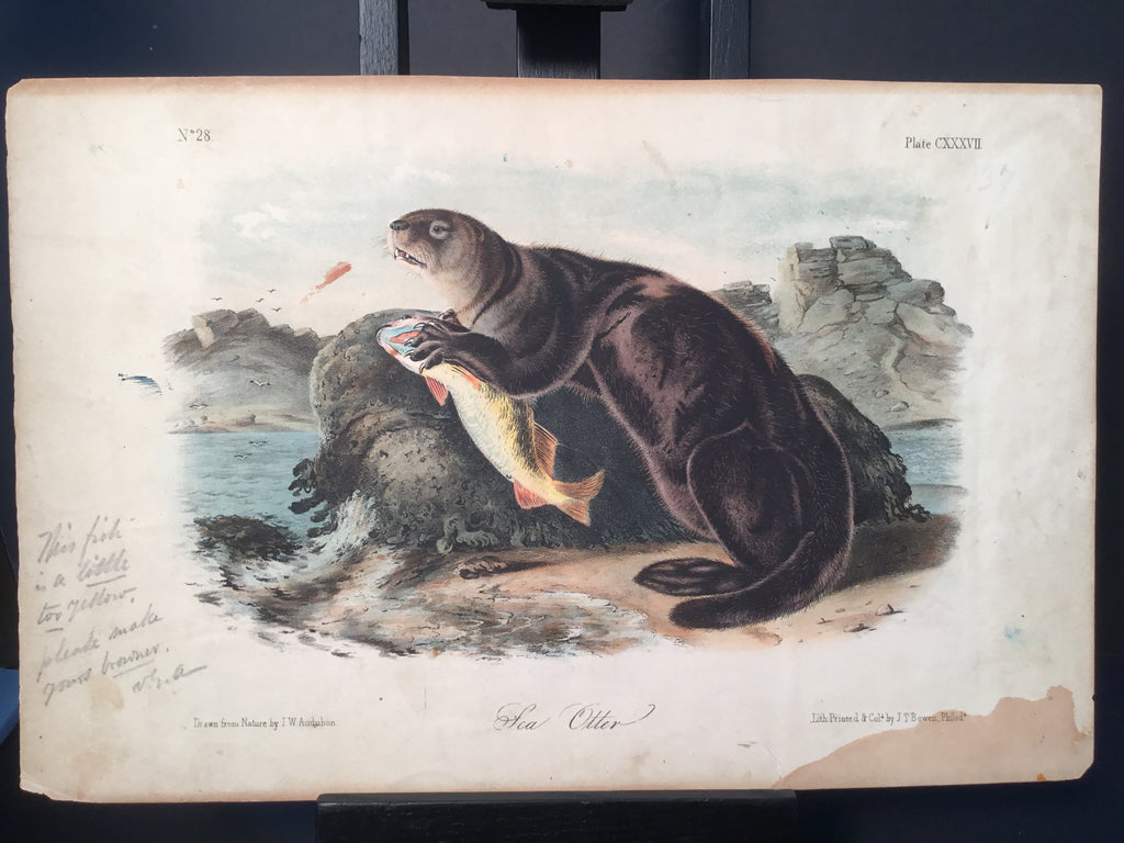 Lord-Hopkins Collection - Sea Otter, VGA signature