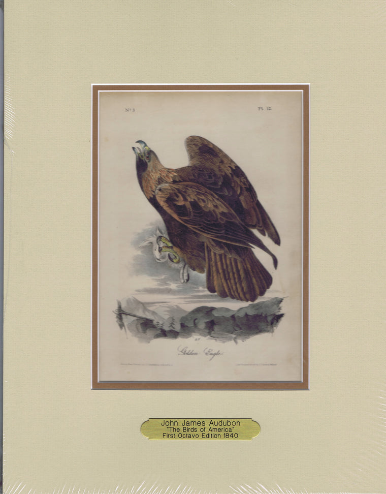 Audubon Original Octavo Matted, Golden Eagle, plate 12