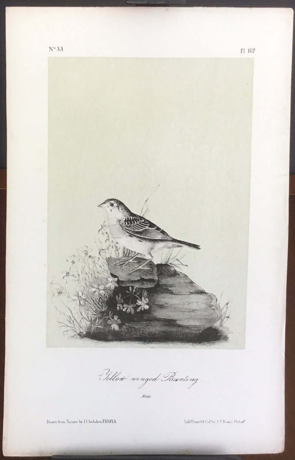 Audubon Octavo Yellow-winged Bunting, plate 162, uncolored test sheet, 7 x 11