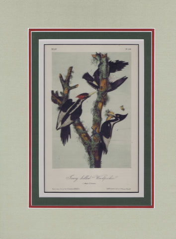 Audubon Original Octavo Matted, Ivory Billed Woodpecker, plate 256