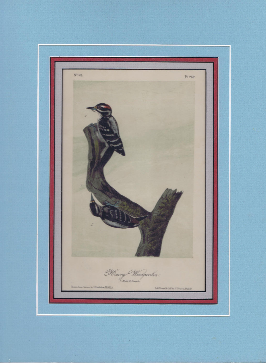 Audubon Original Octavo Matted, Hairy Woodpecker, plate 262