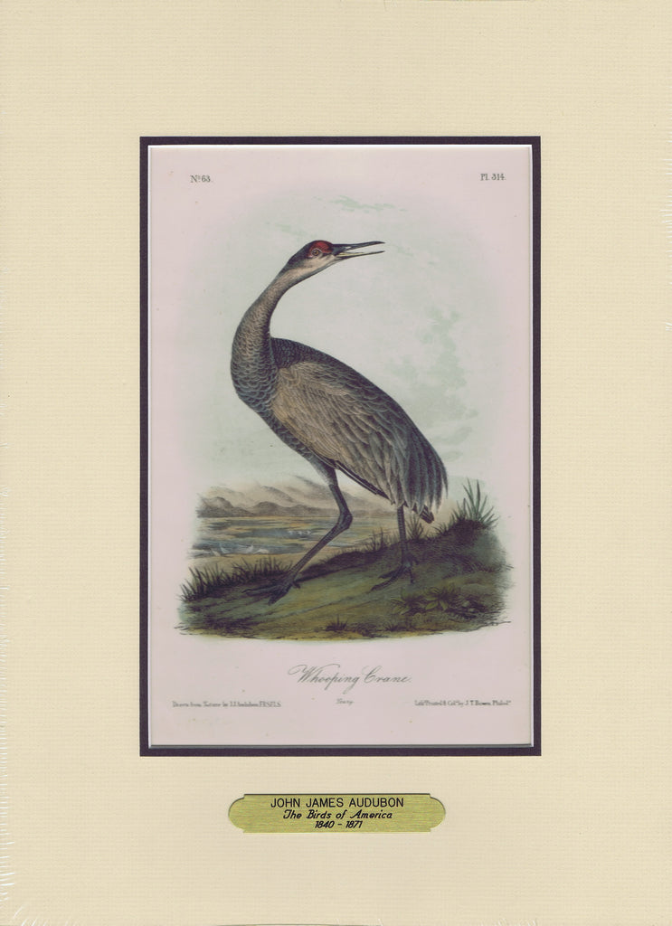 Audubon Original Octavo Matted, Whooping Crane Young, plate 314