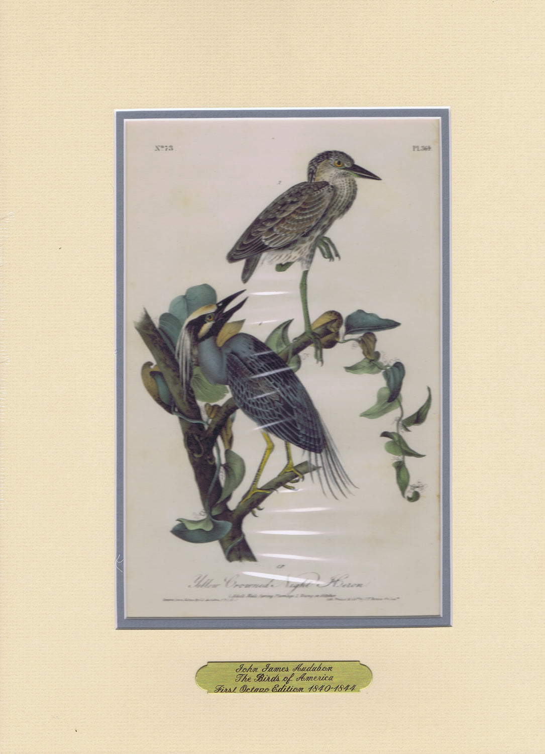 Audubon Original Octavo Matted, Yellow-crowned Heron, plate 364