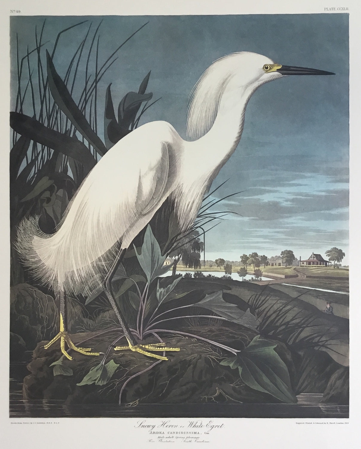 Princeton double elephant Snowy Egret with wide margins trimmed to 21 x 24 inches.