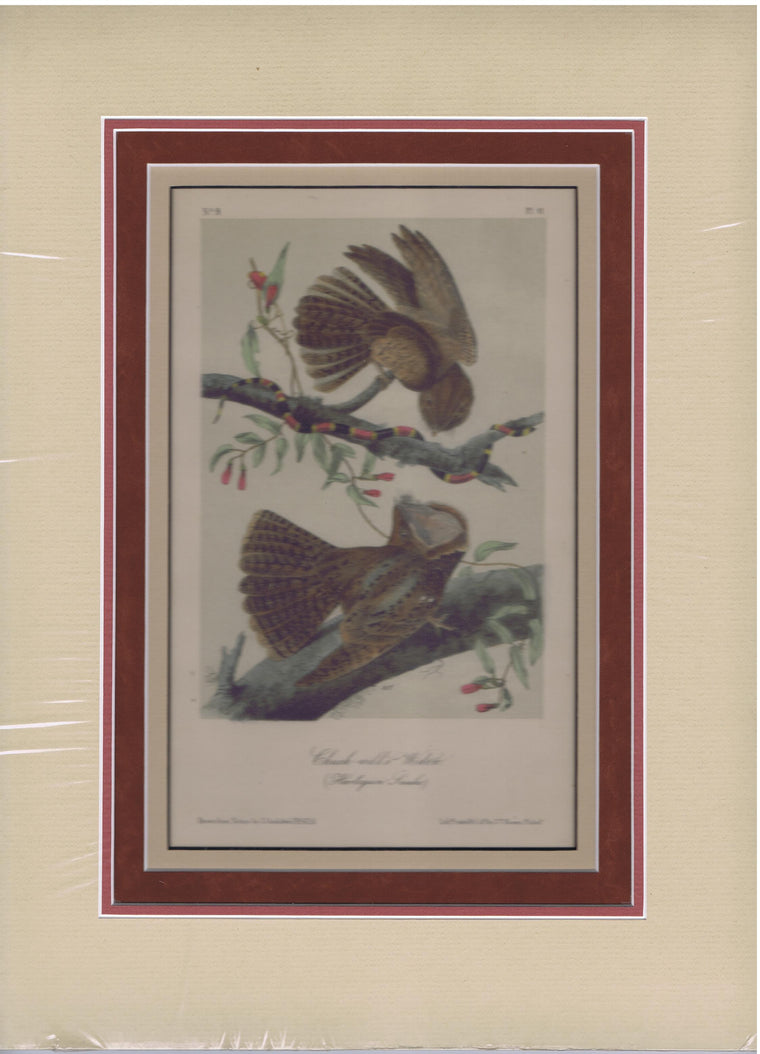 Audubon Original Octavo Matted, Chuck Will's Widow, plate 41