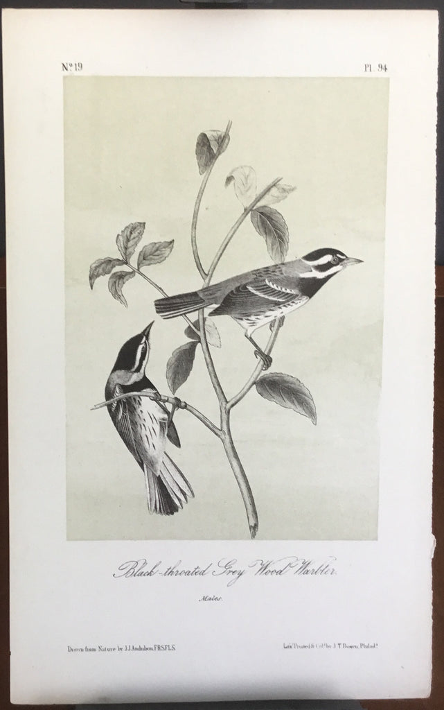 Audubon Octavo Black-throated Grey Wood Warbler, plate 94, uncolored test sheet, 7 x 11