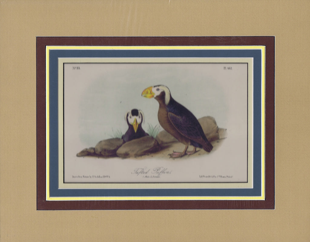 Audubon Original Octavo Matted, Tufted Puffin, plate 462
