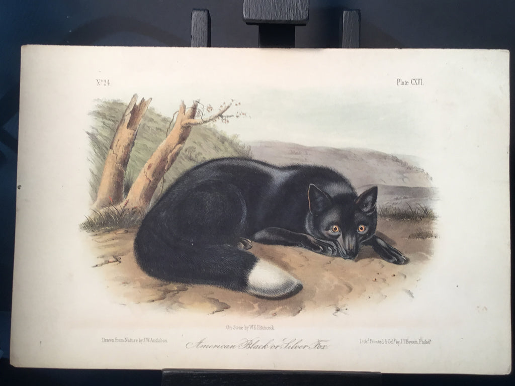 Lord-Hopkins Collection - American Black or Silver Fox