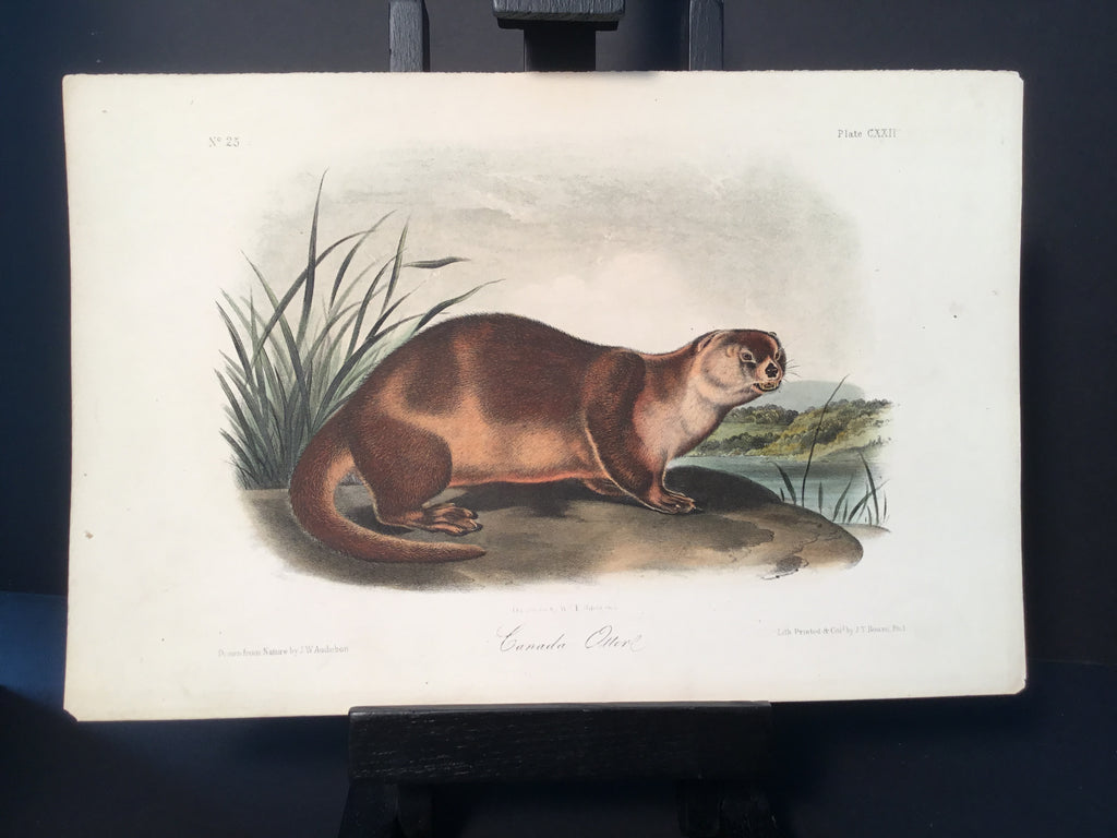 Lord-Hopkins Collection - Canada Otter