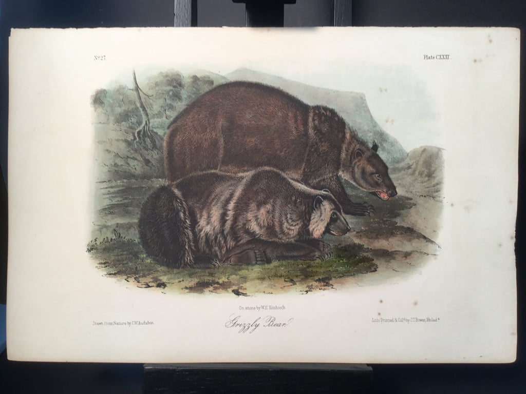 Lord-Hopkins Collection - Grizzly Bear