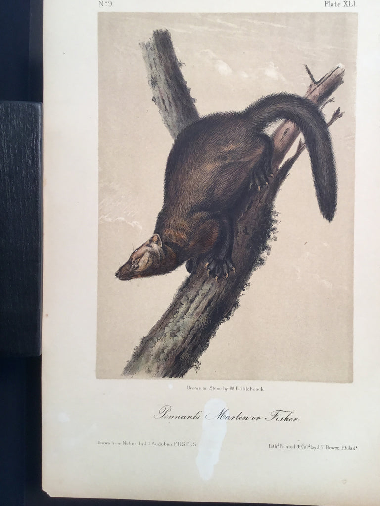 Lord-Hopkins Collection - Pennant's Marten or Fisher